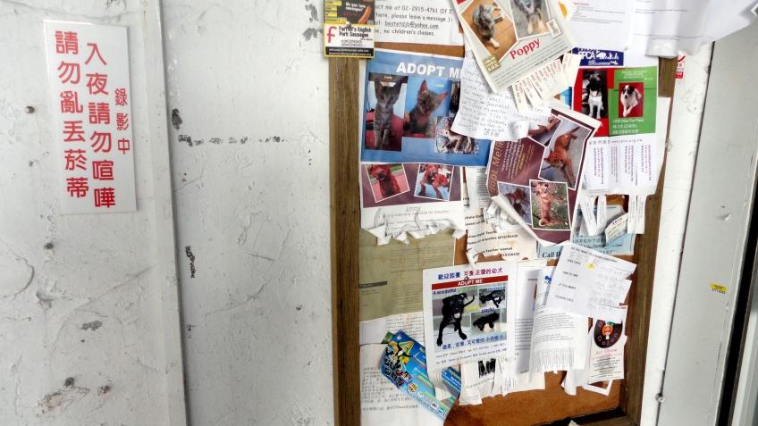 animal rescue bulletin board