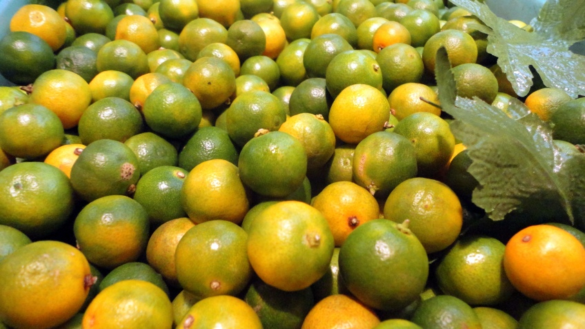 金橘 calamansi