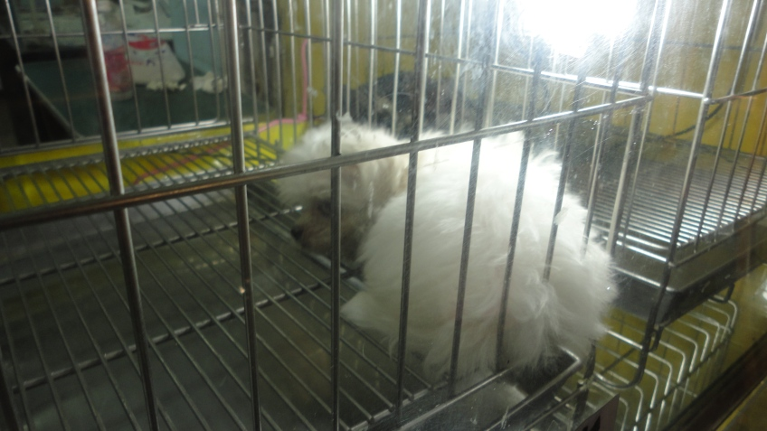 puppy in a cage, sleeping