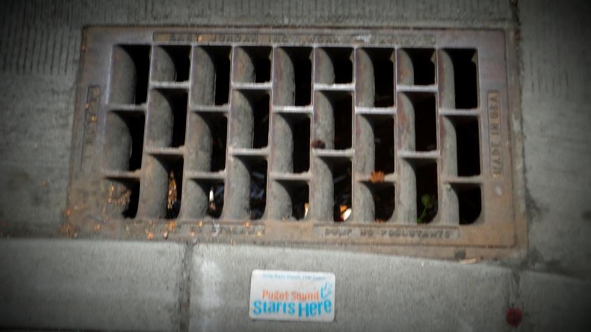storm drain:  puget sound starts here